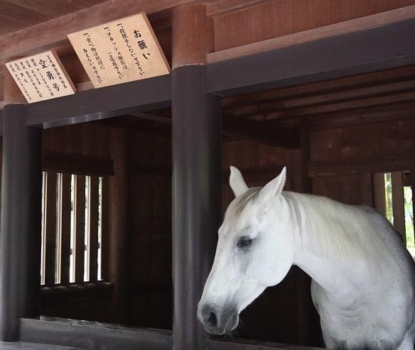内宮に居る神馬の名前「国春くにはる」「笑智えみとも」外宮に居る神馬の名前「草音くさおと」「空勇そらいさむ」
