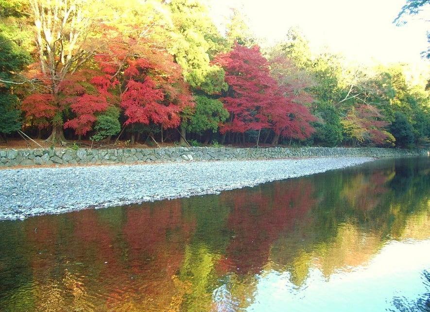 伊勢神宮「内宮・外宮」の「紅葉が一番キレイな見頃とスポット」 (2)
