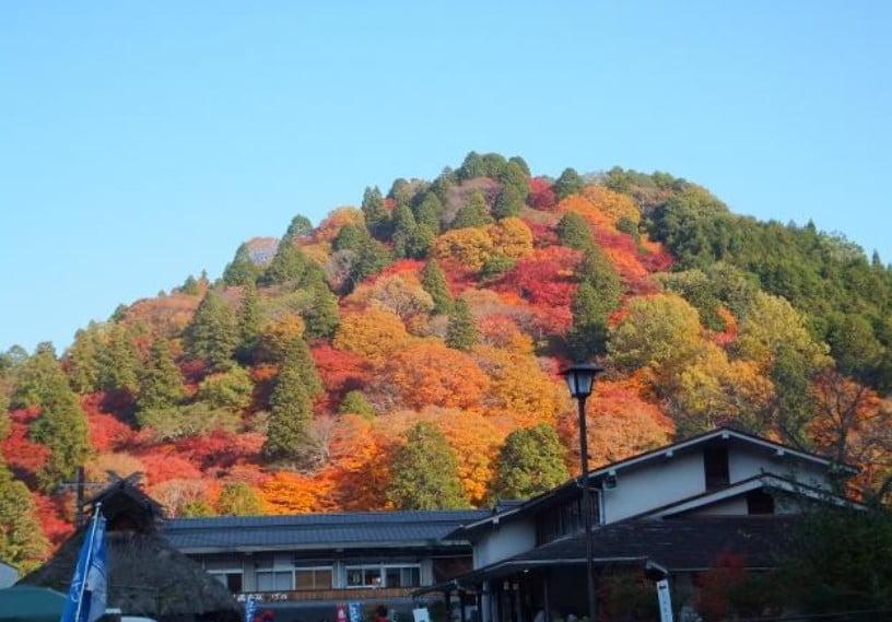 伊勢神宮「内宮・外宮」の「紅葉が一番キレイな見頃とスポット」