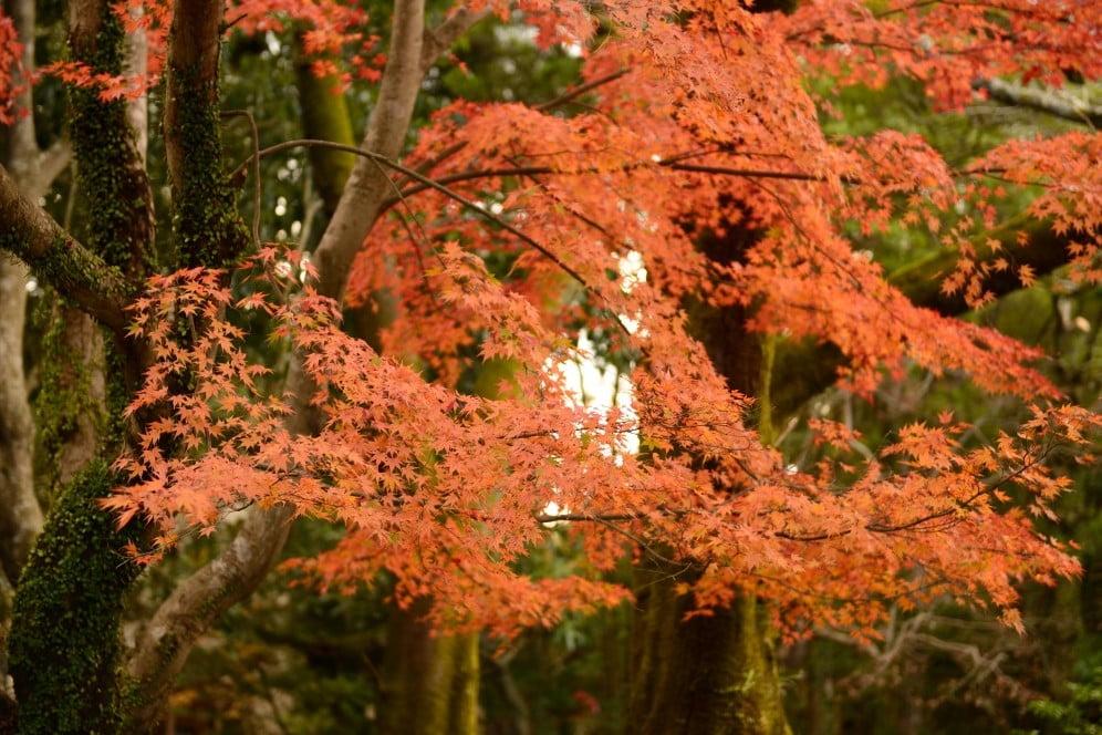 伊勢神宮「内宮・外宮」周辺・付近の紅葉のスポット (2)