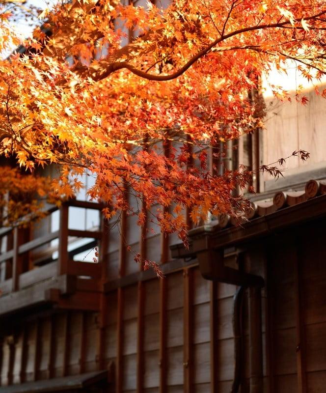伊勢神宮「内宮・外宮」周辺・付近の紅葉のスポット