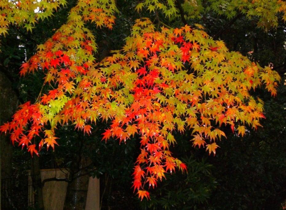 伊勢神宮(内宮・外宮)の紅葉のライトアップの情報について