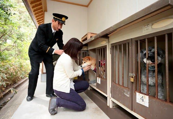 愛犬・愛猫を連れて行きたい!伊勢神宮(内宮・外宮)でペット(犬・猫)を預かりできる?