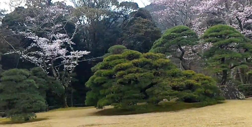 伊勢神宮・内宮「神苑」の春と桜の見頃