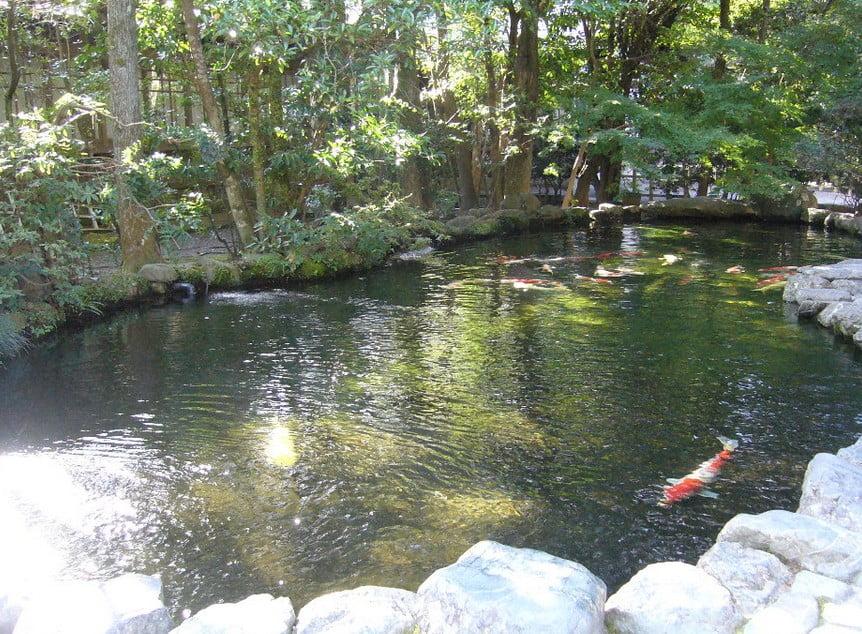 饗膳所前の池の大掃除