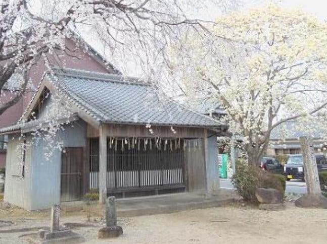 銭掛松の桜